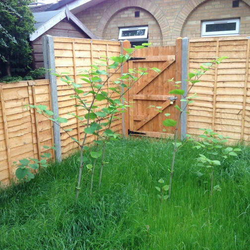 expert witness service japanese knotweed
