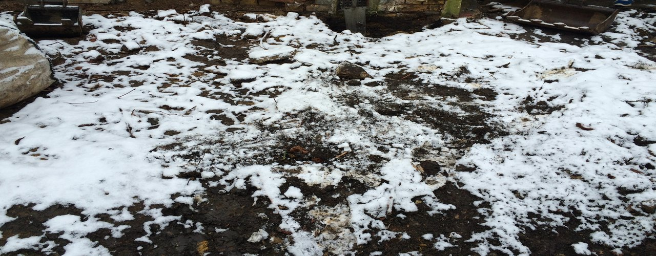 Japanese knotweed removal in the snow