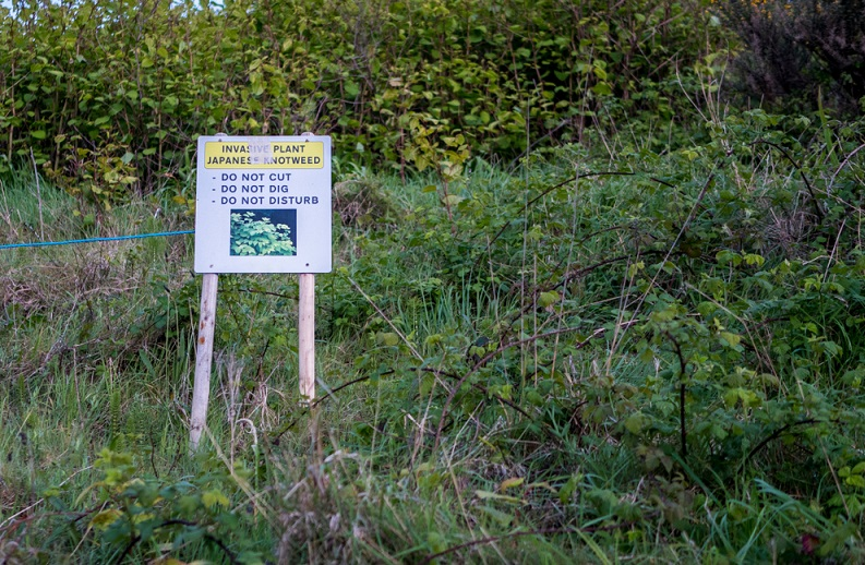 Commercial ground infested with Japanese knotweed with warning sign, awaiting the removal of the Japanese knotweed