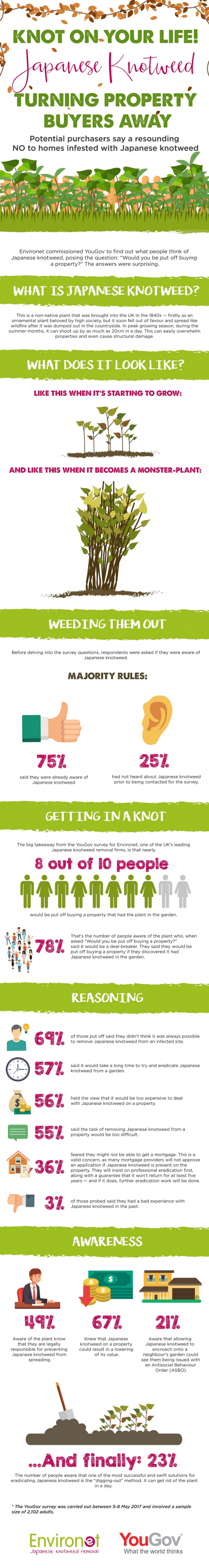 Infographic explaining the answer would you buy a house with japanese knotweed.
