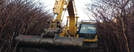 Japanese Knotweed cane removal
